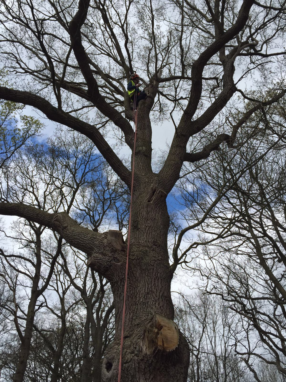 Tree survey for bats