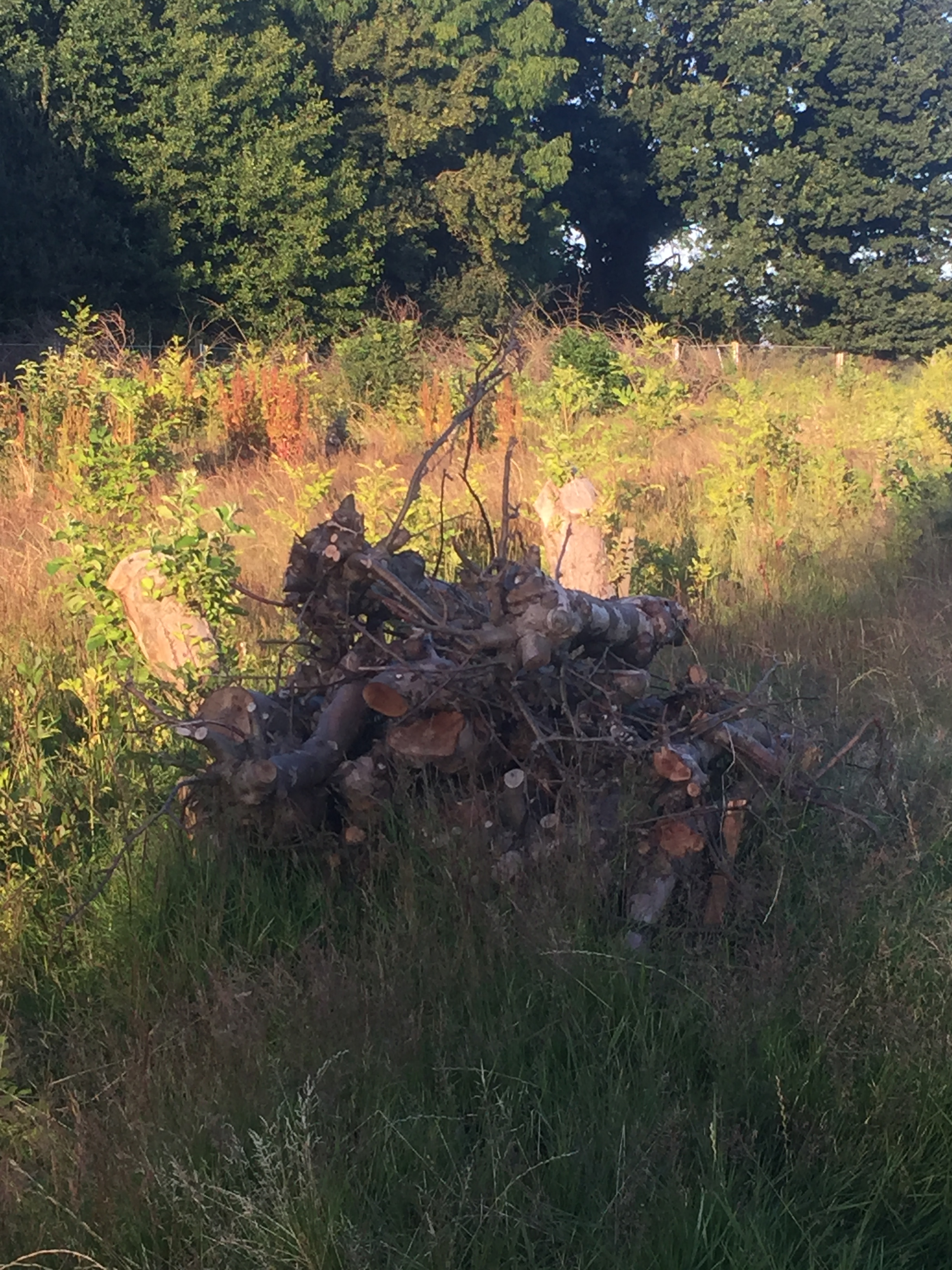 Log pile for reptiles and amphibians