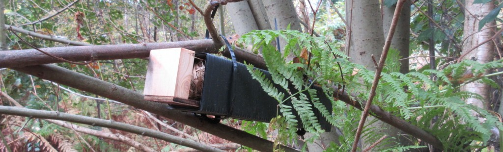 Dormice found in West Sussex site