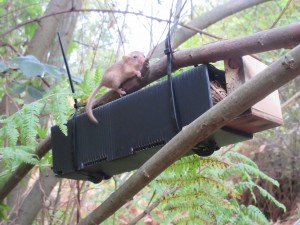 Dormouse nest box