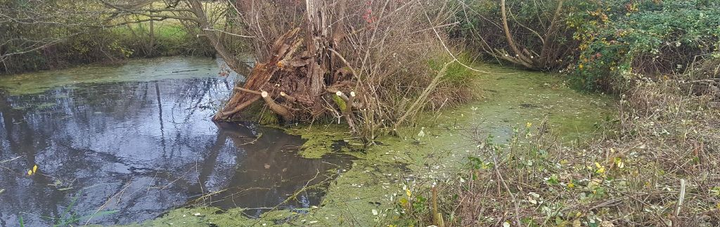 Pond Clearance in West Sussex