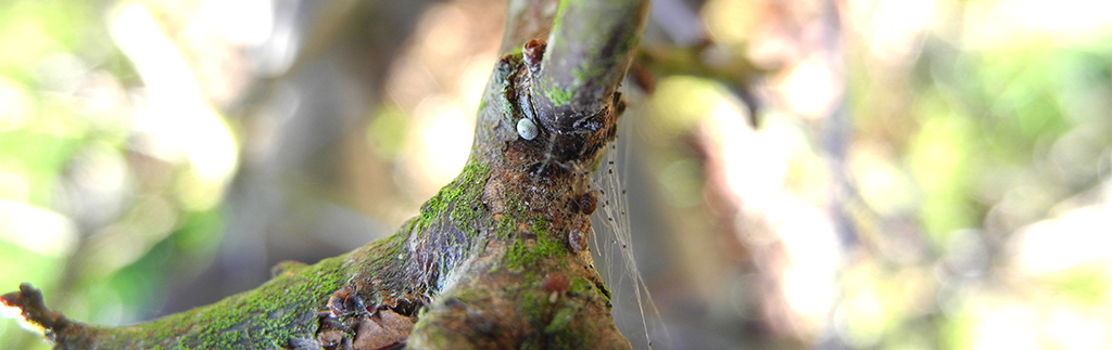 Winter Egg Hunt: Brown Hairstreak Survey